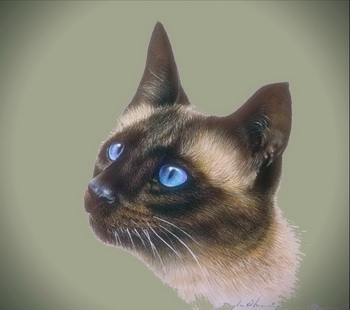 Слайдшоу из фотографий больших кошек